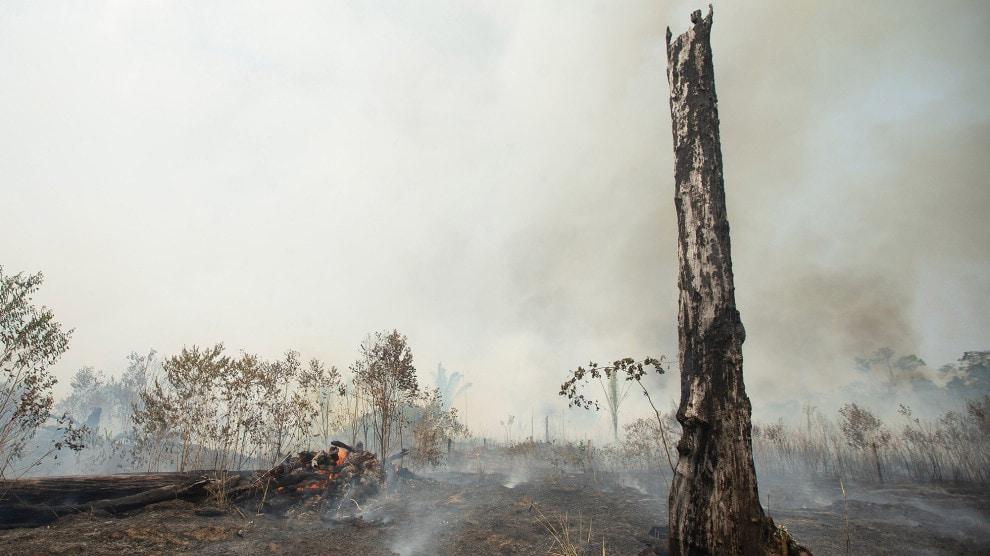Amazon Rainforest Wildfires 2019