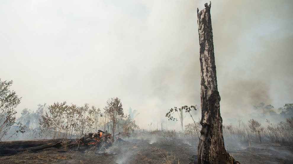 Amazon Rainforest Wildfires 2019